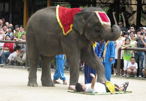 Wild Elephants Valley